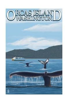 size: Art Print: Orcas Island, WA - Whales and Ferry by Lantern Press : Orcas Island, Vintage Posters, Framed Artwork, Find Art, Whales, Lantern, Art Prints, Digital, World