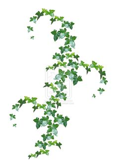 Ivy tattoo - maybe a cascade pattern like this?