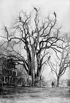 Not too many clothes on show, but just couldn't resist this extreme tree pruning before the age of bucket lifts/cherry pickers. Vintage Pictures, Old Pictures, Old Photos, Giant Tree, Big Tree, Tree Surgeons, Rare Historical Photos, Tree Pruning, All Nature