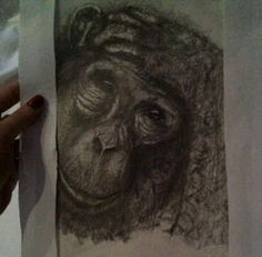 My chimp sketch
