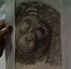 My chimp sketch