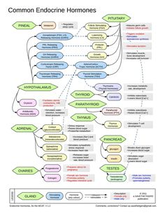 Common ensocrine hormones