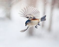 Birds and photography: The Art of Staying Aloft by SmallMysteries