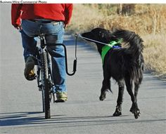 Bike Springer for dogs. I want this!
