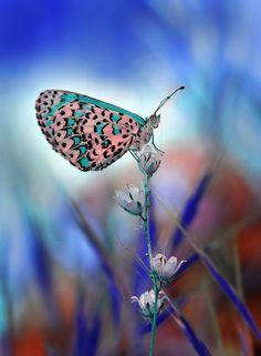 Photo Butterfly by Mustafa Öztürk