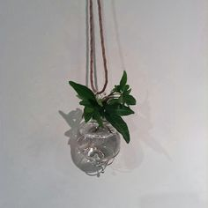 Stefano Poletti, Botanicus Pendant (Murano Glass, silver, water..)