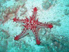 #Scuba Diaries: #Diving Tofo, #Mozambique |