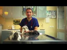 Vétérinaires Sans Frontières, c'est quoi? Vidéo...