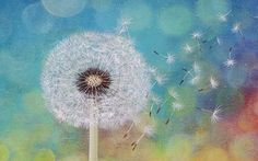 How To Paint A Dandelion: 10 Amazing and Easy Tutorials! Acrylic Painting Lessons, Acrylic Painting Tutorials, Painting & Drawing, Painting Tips, Painting Videos, Dandelion Drawing, Dandelion Painting, Painting Flowers, The Art Sherpa