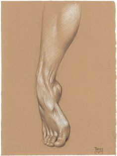 Trixie's Right Foot pencil and white Prismacolor pencil on Rives BFK Tan Heavyweight Printmaking Paper Anatomy Sketches, Anatomy Drawing, Anatomy Art, Human Anatomy, Art Sketches, Feet Drawing, Life Drawing, Drawing Hands, Sketch Drawing