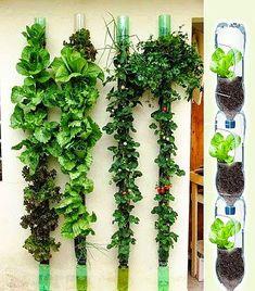 Hydroponic Gardening Ideas Creative Ideas To Reuse Plastic Bottles