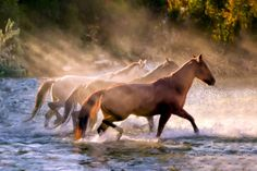 The Crossing by Janet Fikar Types Of Horses, Horse Face, Wild Mustangs, Horse World, Take Better Photos, White Horses, Horse Pictures, Stunning View, Big Dogs