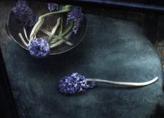 Impromtu, photography by Katia Chausheva. In Nature, Vegetal, Flower, plant. Impromtu, photography by Katia Chausheva. Image #374014