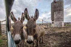 farm-II-018 | Jennifer Silverberg Photography