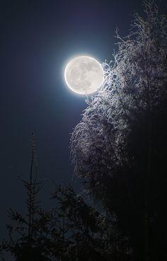 ❥‿↗⁀simply-beautiful-world pineandantler:  full moon bangern