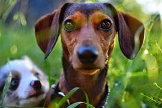 El miedo, la muerte o los cambios de clima... Los perros nos sorprenden por su sexto sentido.
