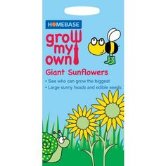 Sunflower Ray Of sunshine - Grow My Own at Homebase -- Be inspired and make your house a home. Buy now.