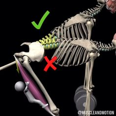 Single Leg Hip Hinge (Bodyweight) Single Leg Hip-Hinge, known also as Single-Leg Romanian Deadlift. Exercise that focuses the load on the… Get Bigger Arms, Body Weight, Exercises, Workouts, Muscle, Christmas Ornaments, Squats, Target, Sport