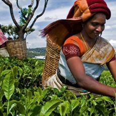 "What is the difference between ""Fair Trade"" and the term ""Fairtrade""?  Read more here... http://www.thefairtradestore.co.uk/blog/2011/12/29/what-is-the-difference-between-fair-trade-and-fairtrade/  #Fairtrade #Blog #DevelopingWorld #Ethical #Trade"