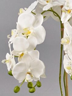 Beautiful White Orchids Large Aged Metal Planter by Demmerys Faux Flowers, Fresh Flowers, Beautiful Flowers, Orchid Leaves, Metal Planters, Phalaenopsis Orchid, Taking Shape, White Orchids, Artificial Flowers