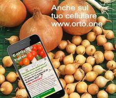 (1) Fare l'orto (@farelorto) | Twitter