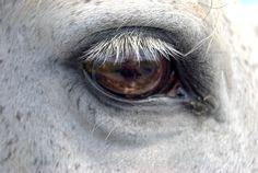 Smoke's Eye by SouthernAttics on Etsy, $15.00