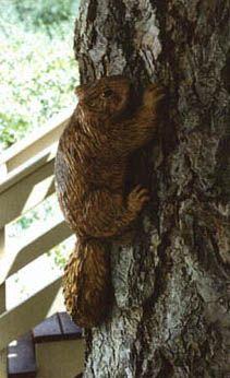 Squirrel detail