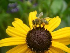Les propriétés médicinales du pollen - bienfait des produits de la ruche - cure de pollen - utilisation du pollen - pollen et santé