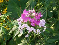 flowers direct ajax