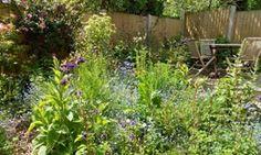 Live Better: Anni Kelsey's garden