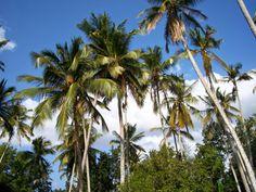 In viaggio con Gianluca e Silvia: Un Paradiso Tropicale...