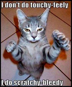 Dangerous cat, watch out. Cat:Meow!!!