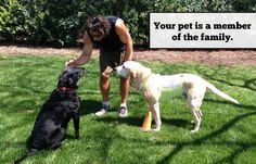What Non-Dog Owners Don't Get  http://slimdoggy.com/what-non-dog-owners-dont-get/