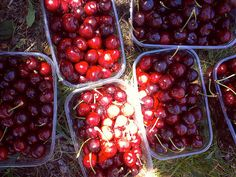 South Africa is the second largest exporter of fruit in the world via Lark Tours