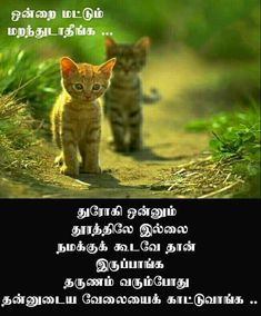 Real Quotes, True Quotes, Qoutes, Legend Quotes, Tamil Motivational Quotes, Good Thoughts Quotes, General Quotes, Reality Of Life, Mindset Quotes