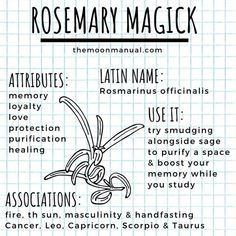 rosemary magick - Busca de Twitter / Twitter Witchcraft Herbs, Witchcraft Spell Books, Green Witchcraft, Magick Spells, Magic Herbs, Herbal Magic, Witch Spell Book, Grimoire Book, Witch Herbs