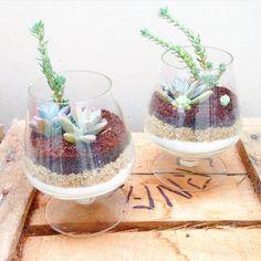 Copos de conhaque e de suculentas também! #oitominhocas #plantinhas #decoração #suculentas #suculovers #ecofriendly