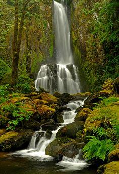 Lower Kentucky Falls    Siuslaw National Forest, Oregon