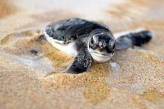 I love sea turtles