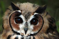 Wow! Wat een mooie uilen kop! Wow! What a nice owl head!