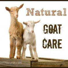 Raising Goats Naturally - Basic Care and Feeding Practices