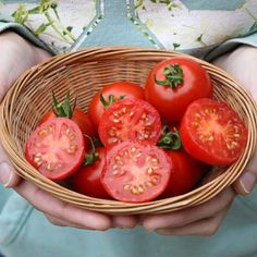 Tomato 42 Days is a large cherry tomato variety. They have a delicious sweet flavour with a little bit acidity. This tomato is called 42 Green Tomatoes, Growing Tomatoes, Cherry Tomatoes, All Plants, Harvest, Seeds, Frozen, Fruit, Vegetables