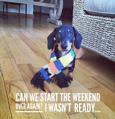 Dachshund meme/ Weenie dogs / Sausage dog / Dachshund love / Dachshund puppies / Doxie / Weiner Dog / Wiener Dog / Dachshund Dog    #dachshundaddict #dachshund #dachshunds #sausagedog #wienerdog #weinerdog #doxie #dachshund dogs #duchshundpuppies Dachshund Quotes, Dachshund Art, Funny Dachshund, Daschund, I Love Dogs, Cute Dogs, Animal Captions, Funny Dog Memes, Puppies And Kitties