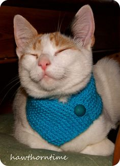 A knit cowl for a Cat. Of course it is. Every cat should have one! However, I don't think my kitties would tolerate a cowl! Knitted Cat, Knitted Animals, Siberian Cats For Sale, What Cats Can Eat, Pet Sweaters, Cat Work, Pet Clothes, Cat Clothing, Cat Sitting