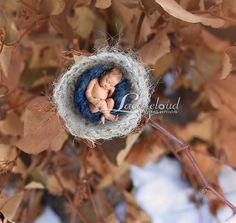 Digital Newborn Backdrop / prop  newborn bird's by LaceCloudStudio