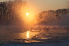 На улице — минус 35. Над частично покрытом льдом, подогреваемом теплыми источниками озером поднимается пар. Около 600 лебедей ежегодно мигрируют сюда на зимовку. И находится это место в России, в селе Урожайное Алтайского края.