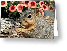 Fox Squirrel Portrait Greeting Card by Sheila Brown