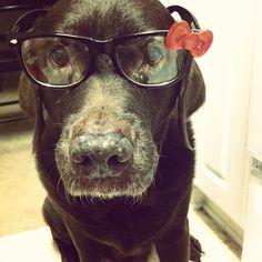 My hipster dog
