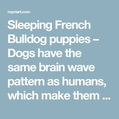 Sleeping French Bulldog puppies – Dogs have the same brain wave pattern as humans, which make them dream too. Suprisingly, it was proved that small dogs tend to dream more than big dogs.