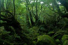 "jasminne: "" 092 by "" Yakushima, Japan Travel, Scenery, Country Roads, Landscape, Instagram Posts, Outdoor, Kyushu, Ainsi"